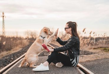 Owner high-fiving their dog