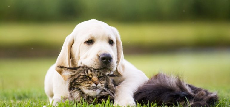 Cat and dog relaxing on the lawn