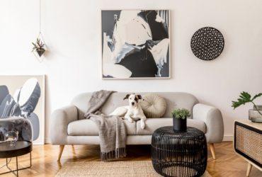 Dog sitting on a grey sofa