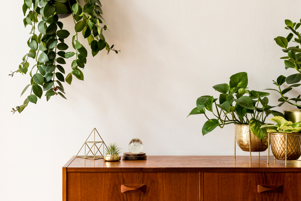 A variety of indoor plants on top of a timber shelving unit